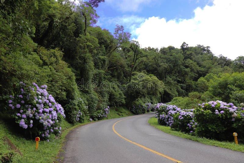 Strada graziosa in pieno dei fiori fotografie stock