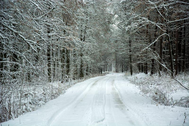 Strada innevata attraverso la foresta mistica di bellezza fotografie stock libere da diritti