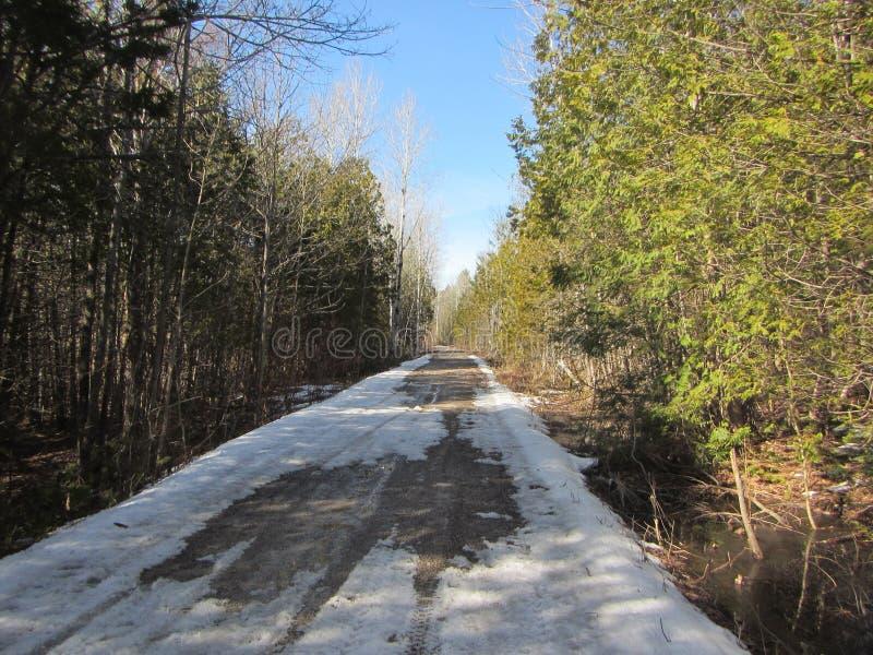 Strada innevata della ghiaia attraverso la foresta in Ontario del sud Canada fotografie stock