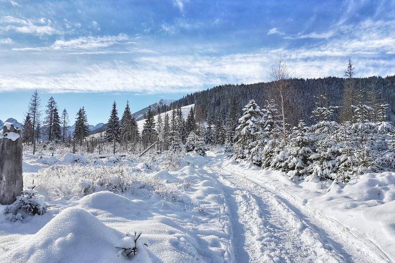 Strada innevata di inverno in valli della montagna immagine stock