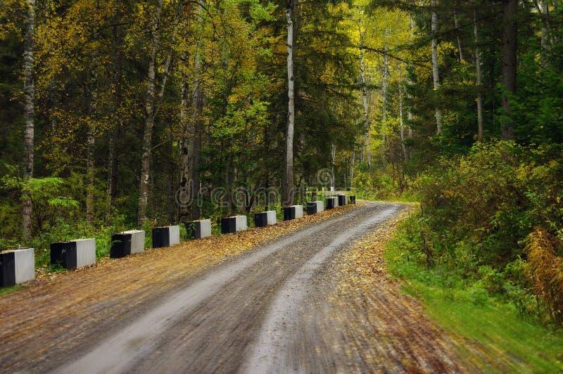 strada a legno immagine stock