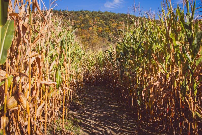 Strada in mezzo ad un giacimento della canna da zucchero un giorno soleggiato con una montagna nella parte posteriore immagini stock