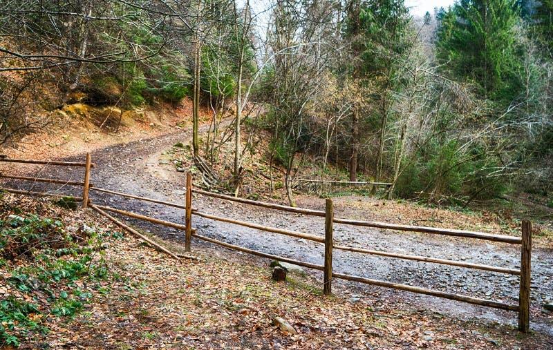 Strada nel boschetto di woods fotografia stock libera da diritti