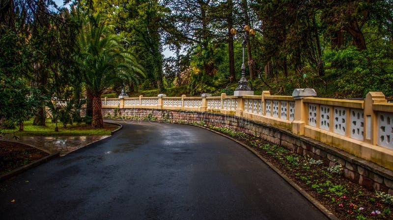 Strada nell'arboreto di Soci in primavera fotografia stock