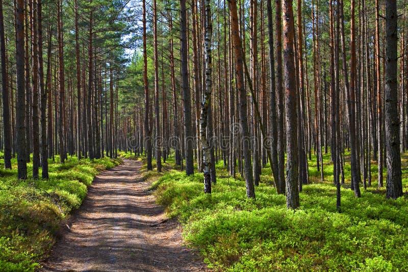 Strada nella foresta. fotografie stock