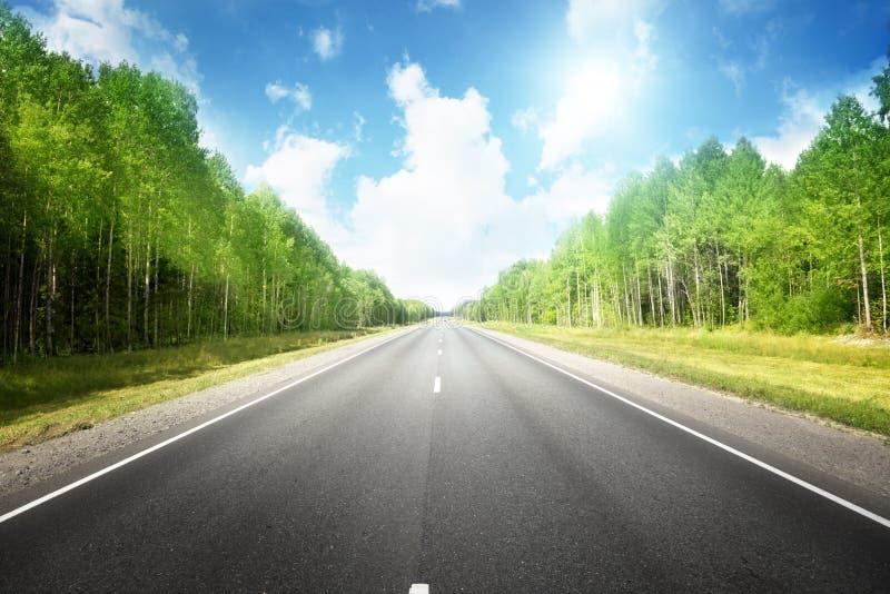 Strada nella foresta di estate immagine stock libera da diritti