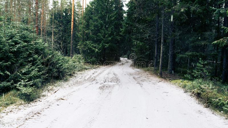Strada nella foresta di inverno durante precipitazioni nevose fotografia stock