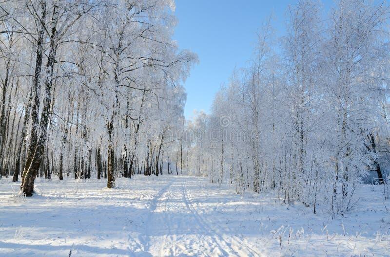 Strada nella foresta pittoresca di inverno coperta di brina fotografia stock