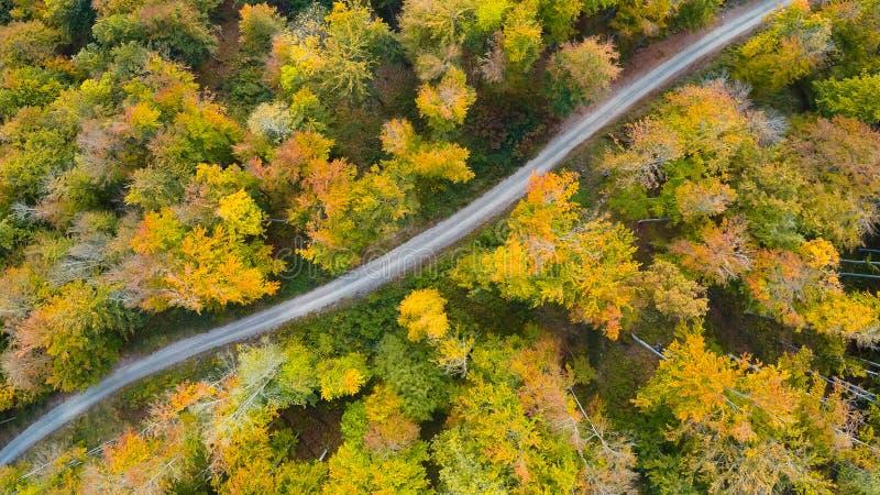 Strada nella fotografia aerea della foresta di autunno fotografia stock libera da diritti