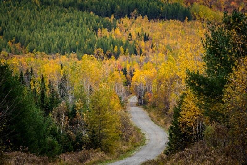 Strada non asfaltata attraverso il legno del nord variopinto di Maine fotografia stock