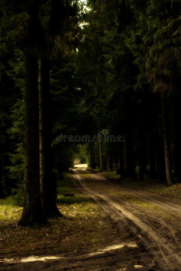 Strada non asfaltata attraverso la foresta immagine stock libera da diritti