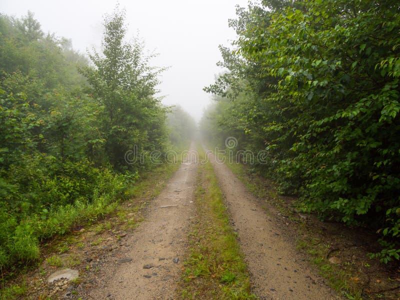 Strada non asfaltata attraverso la foresta nebbiosa in Maine fotografia stock libera da diritti