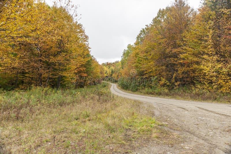 Strada non asfaltata che curva attraverso il legno di New Hampshire fotografia stock