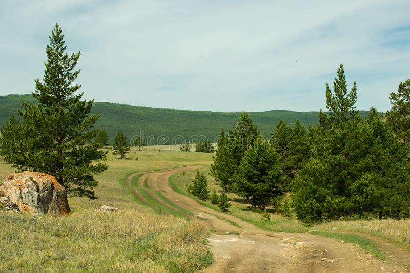 Strada non asfaltata d'avvolgimento attraverso le colline verdi fertili nella steppa nella foresta fra i pini fotografia stock