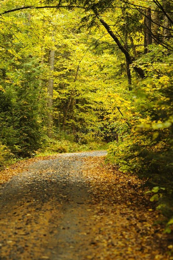 Strada non asfaltata di New Hampshire che curva attraverso il legno fotografia stock libera da diritti