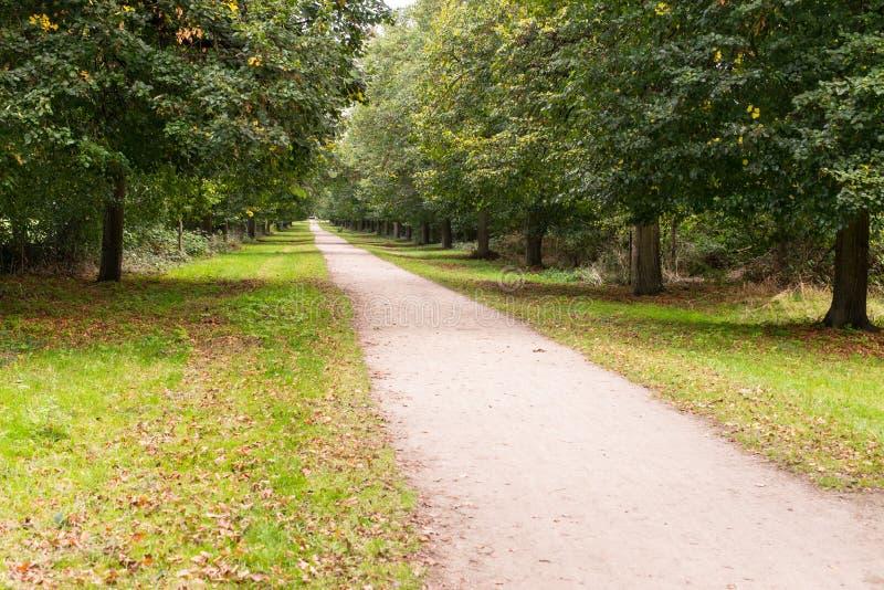 Strada non asfaltata diritta lunga di suolo bianco in mezzo ai wi della foresta immagini stock libere da diritti