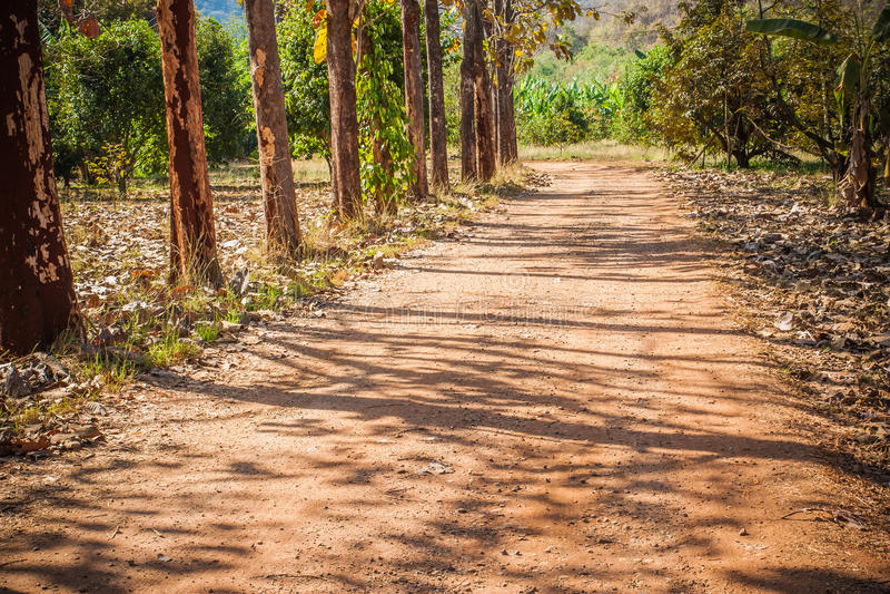 Strada non asfaltata in mezzo alla foresta di yai di khao fotografia stock libera da diritti
