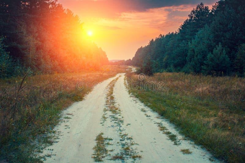 Strada non asfaltata nella foresta fotografia stock