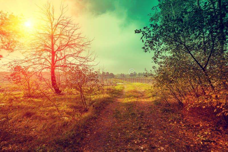 Strada non asfaltata nella foresta nella mattina nebbiosa ad alba fotografia stock