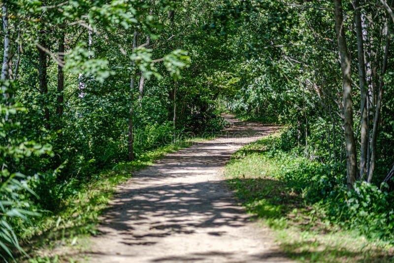 strada non asfaltata romantica della ghiaia in campagna nella sera verde di estate immagine stock