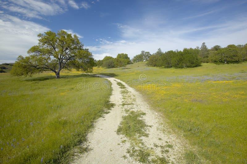 Strada non asfaltata ventosa fotografie stock libere da diritti