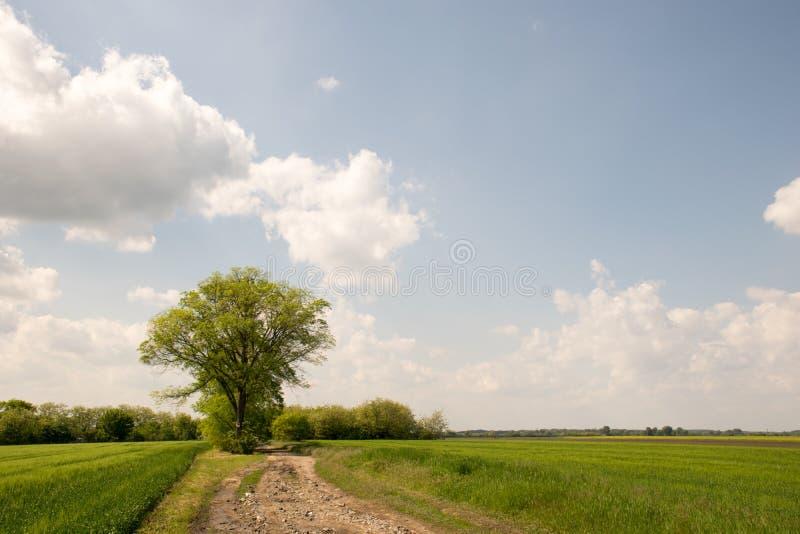 Strada nuvolosa con gli alberi fotografia stock