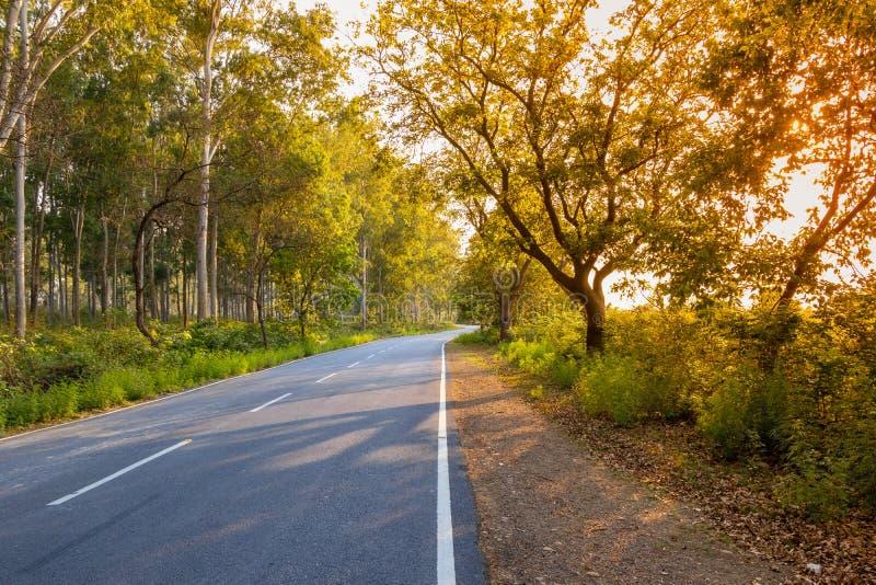 Strada o strada principale sola attraverso gli alberi immagini stock libere da diritti