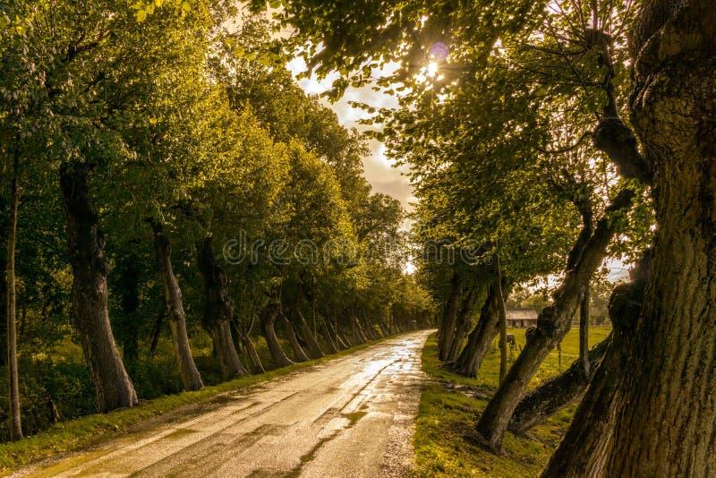 Strada obliqua degli alberi fotografia stock libera da diritti