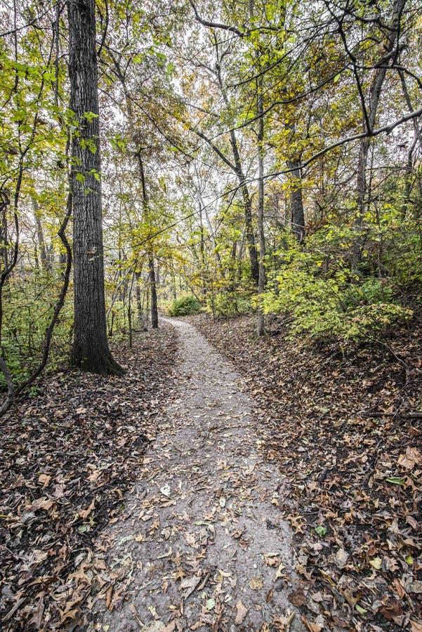 Strada pedonale nella foresta immagine stock