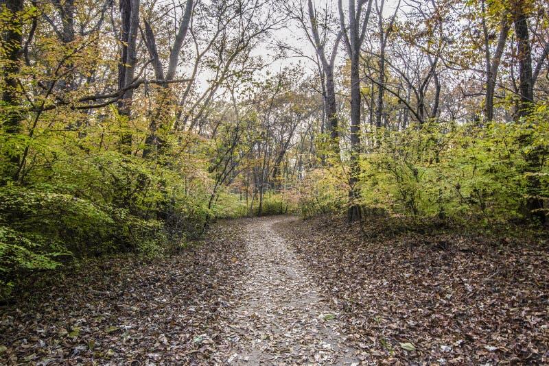 Strada pedonale nella foresta fotografia stock libera da diritti