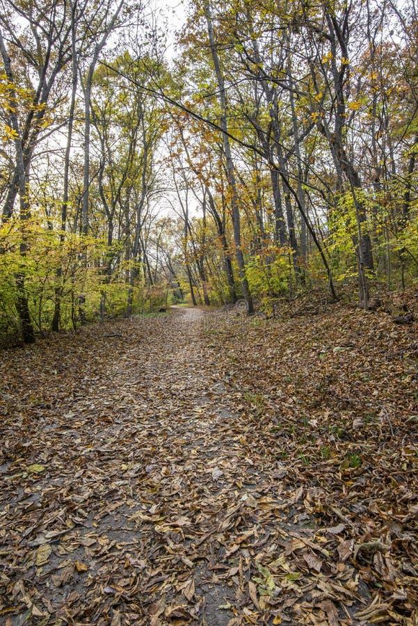 Strada pedonale nella foresta fotografie stock