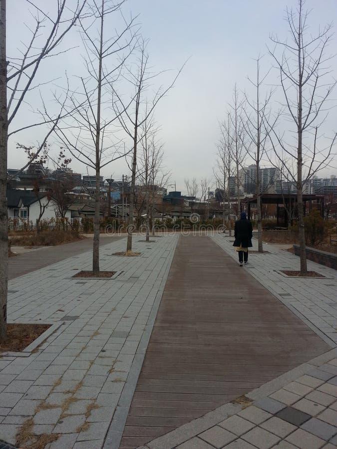 Strada pedonale pavimentata o modo della passeggiata con gli alberi dai lati fotografie stock libere da diritti