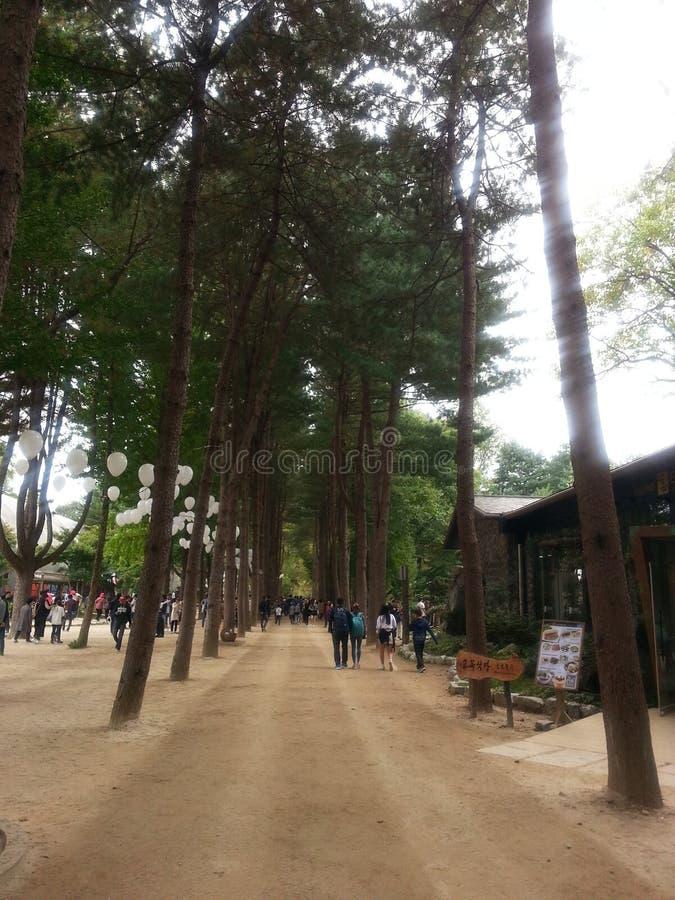 Strada pedonale pavimentata o modo della passeggiata con gli alberi dai lati per la passeggiata pubblica fotografia stock libera da diritti