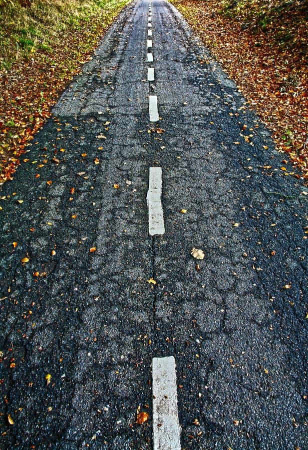 Strada per le bici in una foresta immagini stock libere da diritti