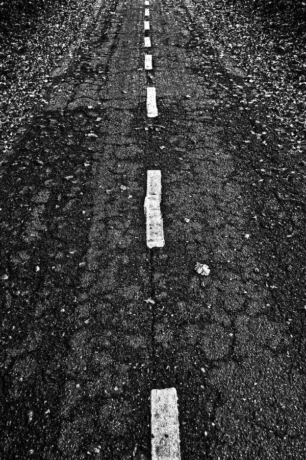 Strada per le bici in una foresta fotografie stock