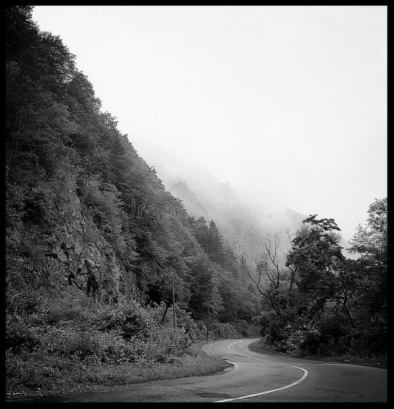 Strada piovosa in bianco e nero immagine stock libera da diritti