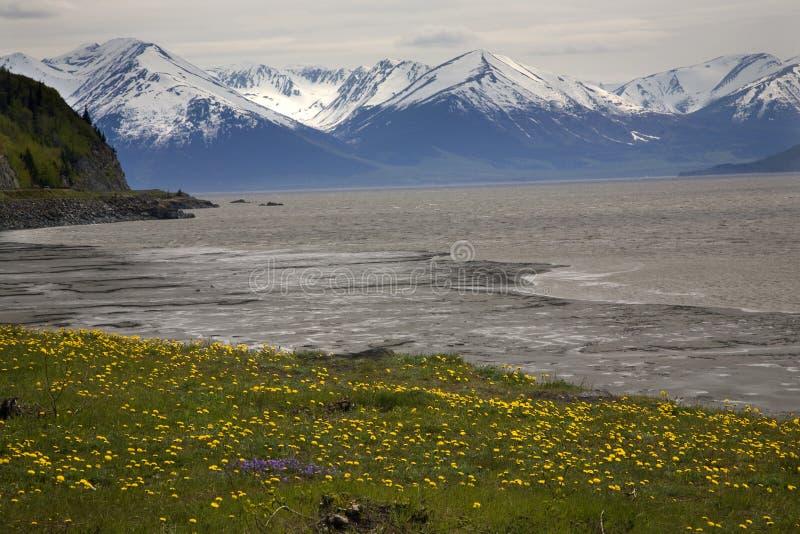 Strada principale Alaska di Seward dei fiori delle montagne della neve fotografie stock