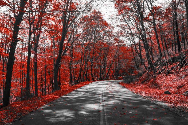 Strada principale con la caduta rossa Forest Landscape fotografie stock libere da diritti