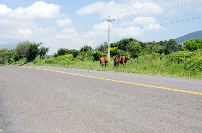 Strada principale e cavalli liberi della gamma immagine stock libera da diritti
