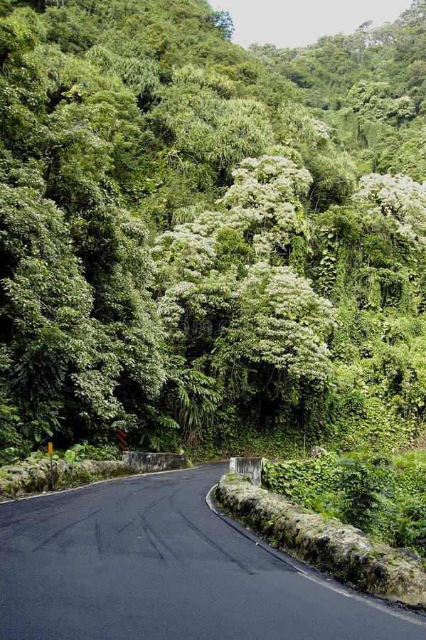 Strada principale tropicale immagine stock libera da diritti