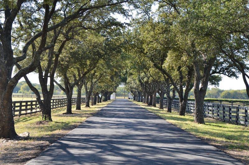Strada privata con gli alberi da entrambi i lati for Strada privata