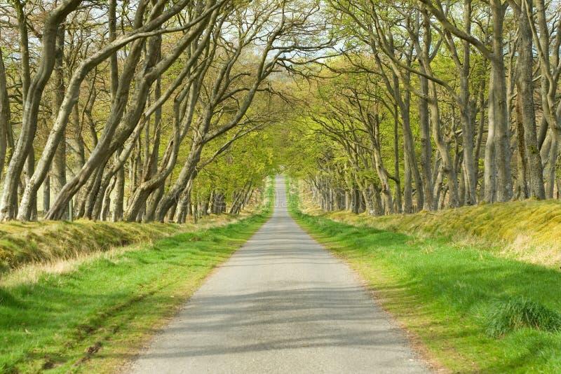 Strada privata, strada, azionamento, strada panoramica fotografie stock