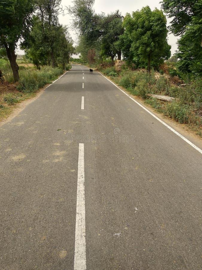 Strada pulita con l'ambiente verde e puro immagini stock libere da diritti