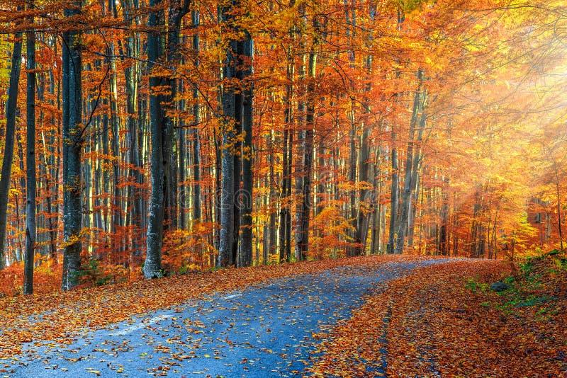 Strada romantica sbalorditiva nella foresta variopinta di autunno immagine stock