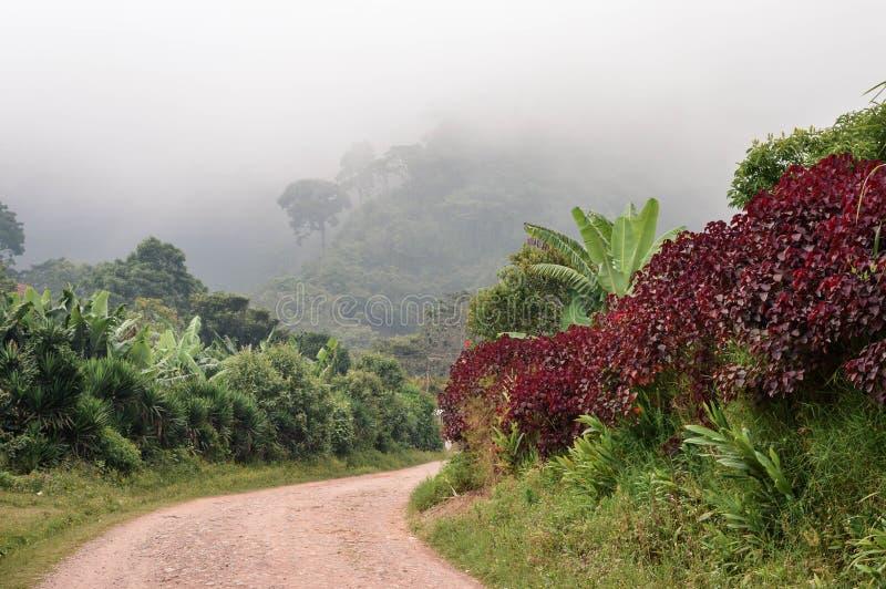 Strada rurale attraverso i paesaggi nebbiosi verso le foreste della nuvola che circondano il piccolo villaggio dei coltivatori de fotografia stock libera da diritti