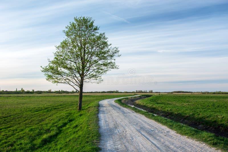 Strada rurale attraverso i prati verdi ed il grande albero solo fotografia stock