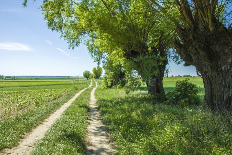 Strada rurale e vecchi alberi immagini stock