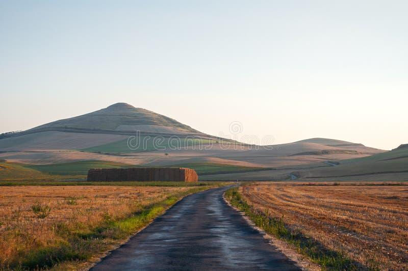 Strada rurale fra i campi gialli di grano, appena raccolti, al tramonto fotografia stock libera da diritti