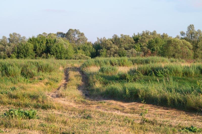 Strada rurale nei prati e nelle foreste selvaggi Paesaggio pittoresco di estate della natura scenica non trattata reale fotografia stock libera da diritti