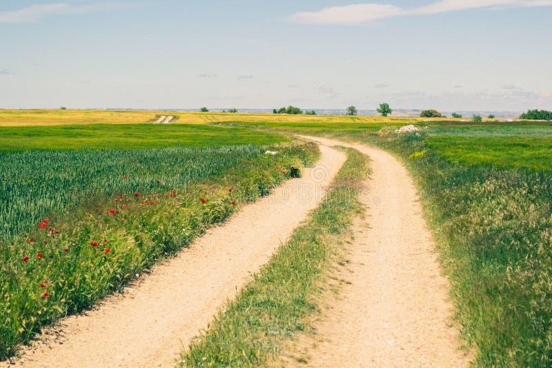 Strada rurale nella campagna con i raccolti del cereale durante la molla immagini stock libere da diritti